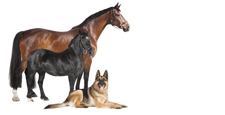 Oberosterreichische Versicherung Tierhalterhaftpflicht
