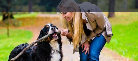 Uelzener Betriebshaftpflicht für Hundeschulen und Tierpensionen