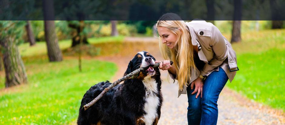 IDEAL Versicherung Hundehalterhaftpflicht