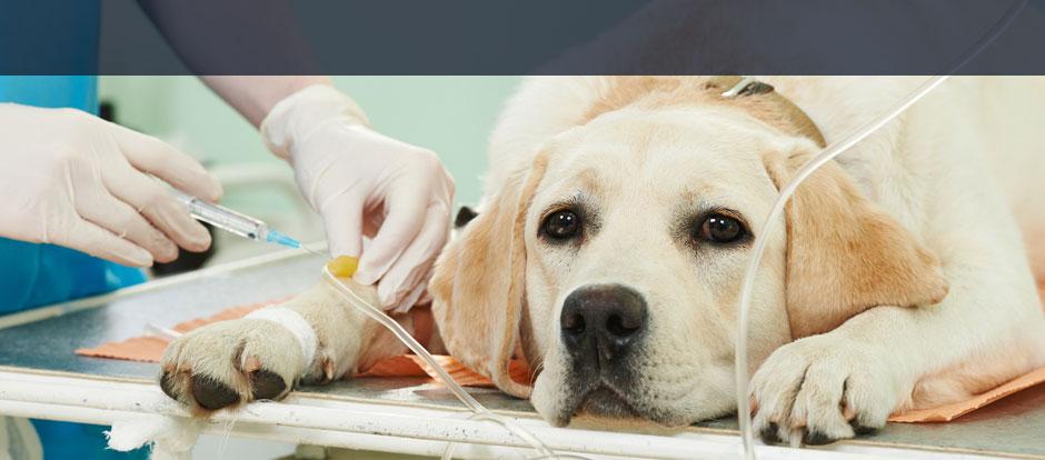 Uelzener Hundeversicherung