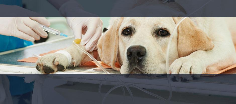 Hundeversicherung Uelzener