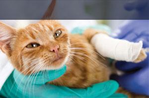 Tierkrankenversicherung Helvetia
