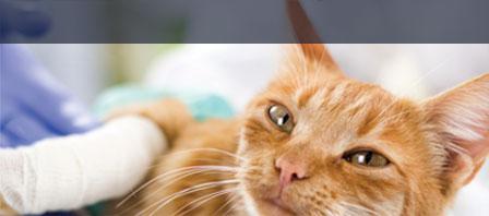 Tierkrankenversicherung DEVK
