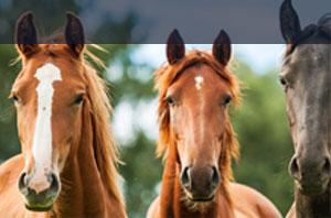 Pferdehaftpflicht Adcuri