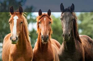 Uelzener Pferdeversicherung