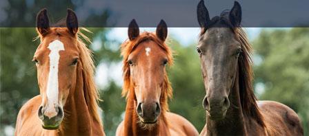 Betriebshaftpflicht für Pferdebetriebe Uelzener