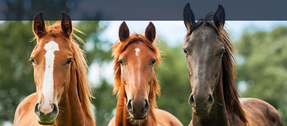 NV Versicherung Pferdehaftpflicht