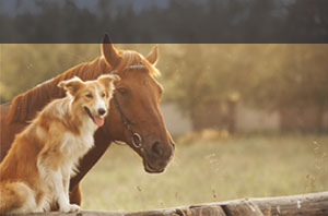 Tierhalterhaftpflicht Grundeigentümer