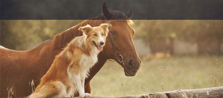 Tierhalterhaftpflicht AXA