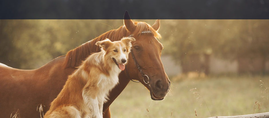 Medienversicherung Tierhalterhaftpflicht