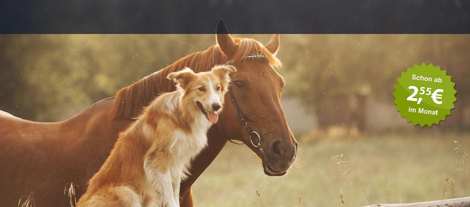 Hundehalterhaftpflicht Bavaria Direkt
