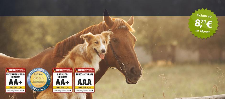 Tierhaftpflicht Die Bayerische
