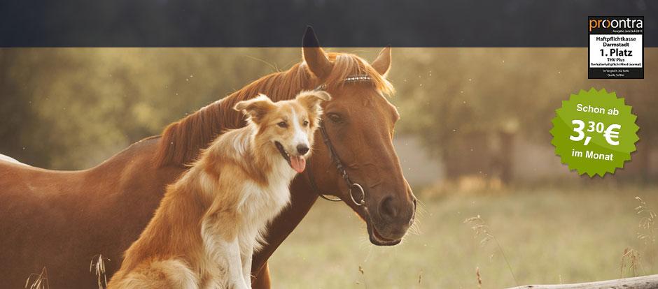 Tierhalterhaftpflicht Die Haftpflichtkasse